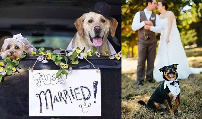 get pet involved in wedding