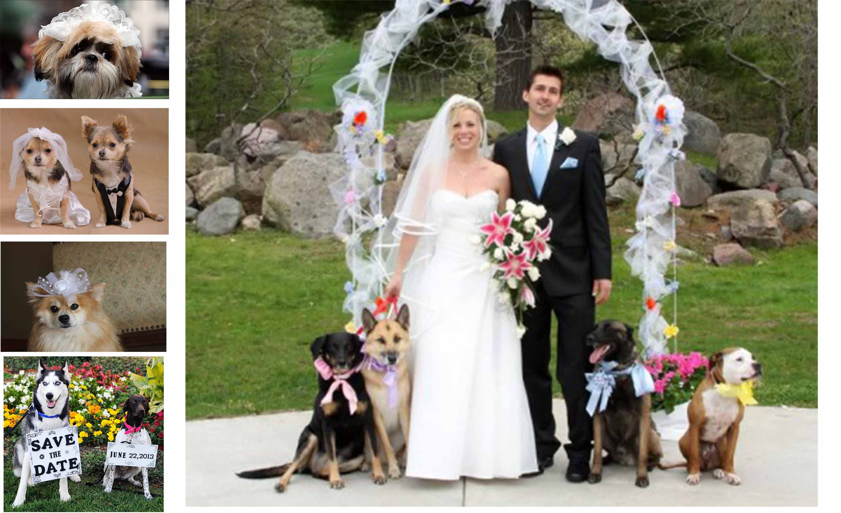 Creative Ideas Of Your Wedding Party Deatails Hyinvitation Pets On The Therapyboxfo Dog Themed